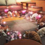 【龍が如く6】「ネコカフェ」攻略方法!猫の好物と居場所一覧まとめ